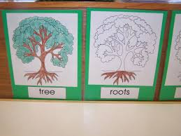 montessori tree printable my montessori journey parts of a tree booklets and other tree stuff
