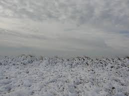 cape cod winter beaches mary richmond u0027s cape cod art and nature