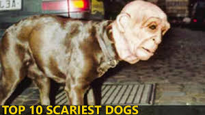 Dog Ghost Halloween Costumes by Top 10 Scariest Halloween Costumes For Dogs You Will Ever See By