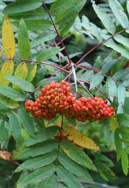 trees are also native plants 11 best trees to plant for new england style foliage gardenista