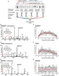co u2010regulation proteomics reveals substrates and mechanisms of apc