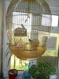 large finch cages bird cages pinterest finch cage