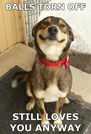 Advice Dog Meme Generator - sad dog meme generator image memes at relatably com