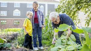 What Is Urban Gardening 7 Examples Of Sustainability In Sweden