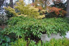 sideways is a thing when talking plants in the garden