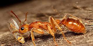 how long ants live and other stange facts about ants