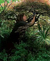 pruning japanese maples gardening