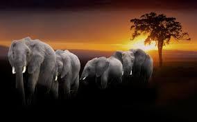 elephants africa rainbow grass babies mobile wallpaper herd desktop wallpapers free 4k animal images sunset wallpaper hd mobile pet