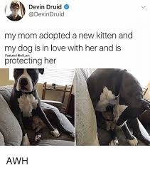 New Love Memes - devin druid my mom adopted a new kitten and my dog is in love with