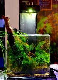 Aquascape Filter Nano Cube Aquascaping Nature Aquarium Aquascaping By Enrico