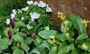 gardens layering bulbs life and style the guardian