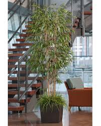 Home Decor Artificial Trees Fill Empty Interior Space With A Silk Tree Petals Com Blog