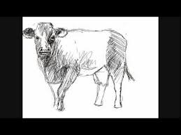how to draw a cow things to draw youtube