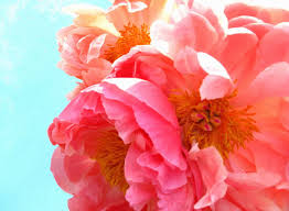 peony flowers how to use flowers for feng shui at home
