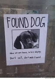 Lost Dog Meme - found dog now we are bros weknowmemes