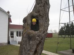 clean humorous tree jokes mccullough s tree service