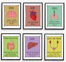 classroom wall art set of 6 educational posters decor