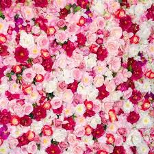 wedding flowers background 10x10ft white pink roses photography backdrops wedding