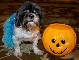 do you dress your dog up for halloween