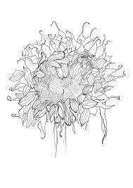 pen drawing sunflower sketch royalty free stock photo image