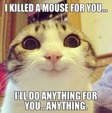 Clean Animal Memes - 40 funny animal memes funoramic