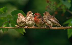 small sparrow birds on branch hd wallpapers rocks