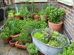 potted herbs don u0027t let the sun fool you nw girls wait until