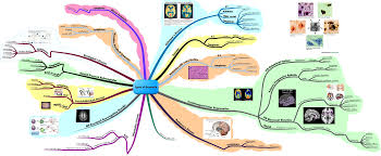 Different Types Of Maps Many Types Of Neurological Conditions Cause Many Variations In