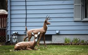 may 10 feuds between neighbors rarely deadly startribune