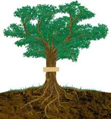 best 25 suffix tree ideas on roots part 3 fix