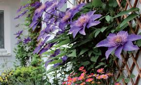 about perfect garden the best plants for your garden