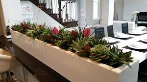 home interior plants designer home newport ca plantopia interior plant service