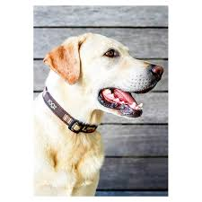 10375 Rogz Fancy Dress Armed Response Dog Collar Xlarge Mocha Bone