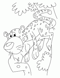 cheetah coloring pages coloring