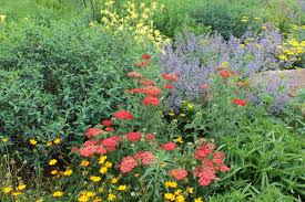 plants for native bees landscaping for pollinators jersey friendly yards