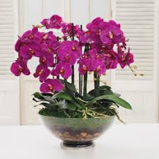 orchids for sale des moines orchids des moines orchids for sale