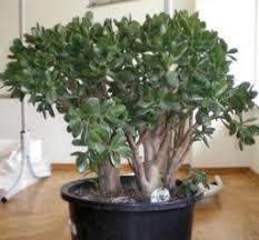 plantes dépolluantes chambre à coucher plante anti pollution quand la nature nous vient en aide