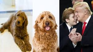 Donald Trump S House by The First Dog Of America