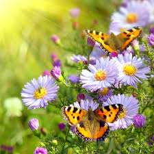 spring flowers and butterflies cool wallpapers i hd images