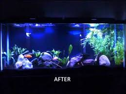55 gallon aquarium light 55 gallon african cichlid tank july 2010 youtube
