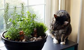 How To Build An Herb Garden How To Make An Amazing Diy Indoor Cat Garden The Anti June Cleaver