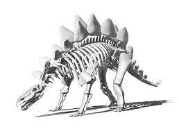 stegosaurus skeleton drawing stock illustration image 76965394