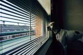 dealing with barking dogs in apartments fido loves