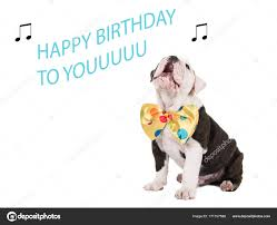 singing happy birthday bulldog puppy sitting and singing happy birthday to