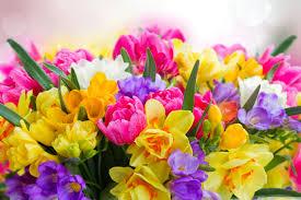 beautiful spring flowers 4k hd desktop wallpaper for 4k ultra