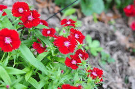 do you know the name of this flower raised urban gardens