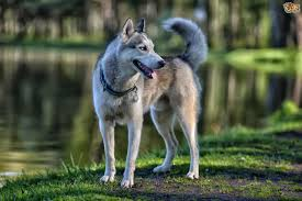 types of dogs what breeds and types of dogs are most likely to roam or wander