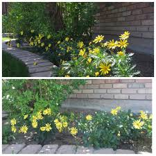 All Star Landscaping by Caddy Brothers All Star Landscaping Llc Home Facebook