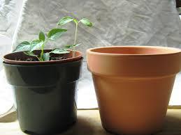 best flower pot ideas best home decor inspirations