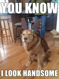 Handsome Meme - handsome dog meme on imgur